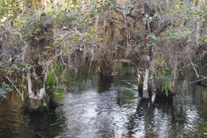 Mangroven neben der Loop Road